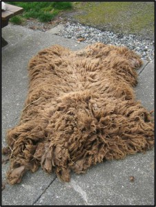 Complete Raw Fleece Outside