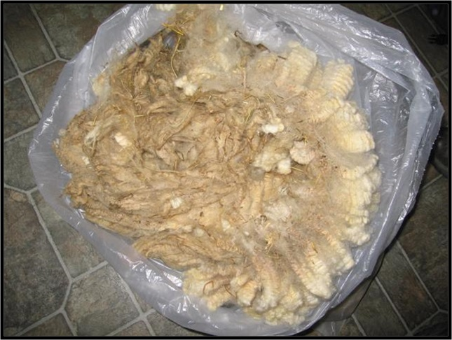 Raw Fleece in Bag, Matted Tips