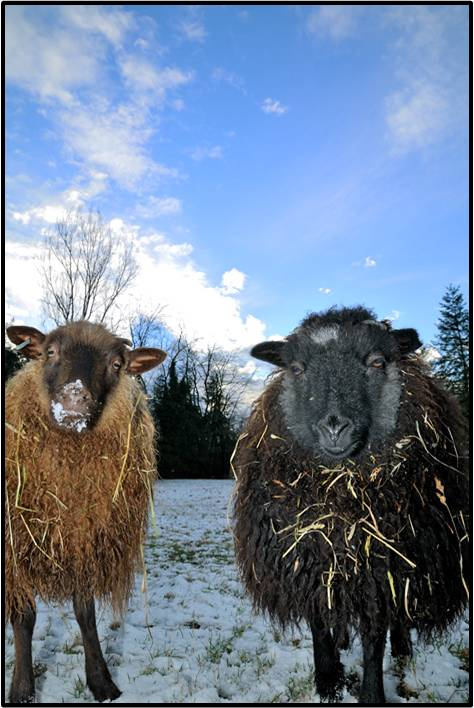 Edgar and Chone Covered in Hay